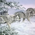 Meute loup